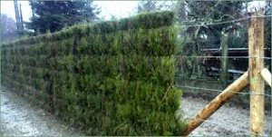 clôture naturelle