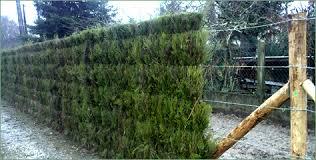 Une muraille naturelle issue par des tiges de bruyères